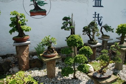 Japanese Bonsai Garden
