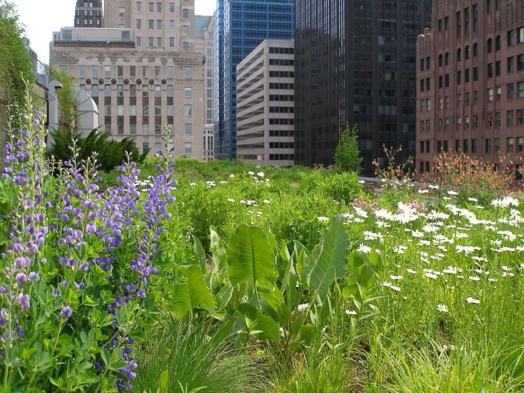 Chicago City Hall Roof Garden Rooftop Garden Green Roof