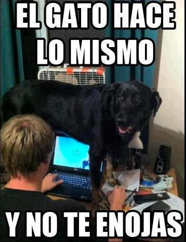 Memes En Espanol Chistes De Perros Memes Perros Memes Animales