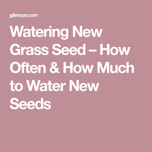Watering New Grass Seed How Often How Much To Water New Seeds Grass Seed Grass Seeds
