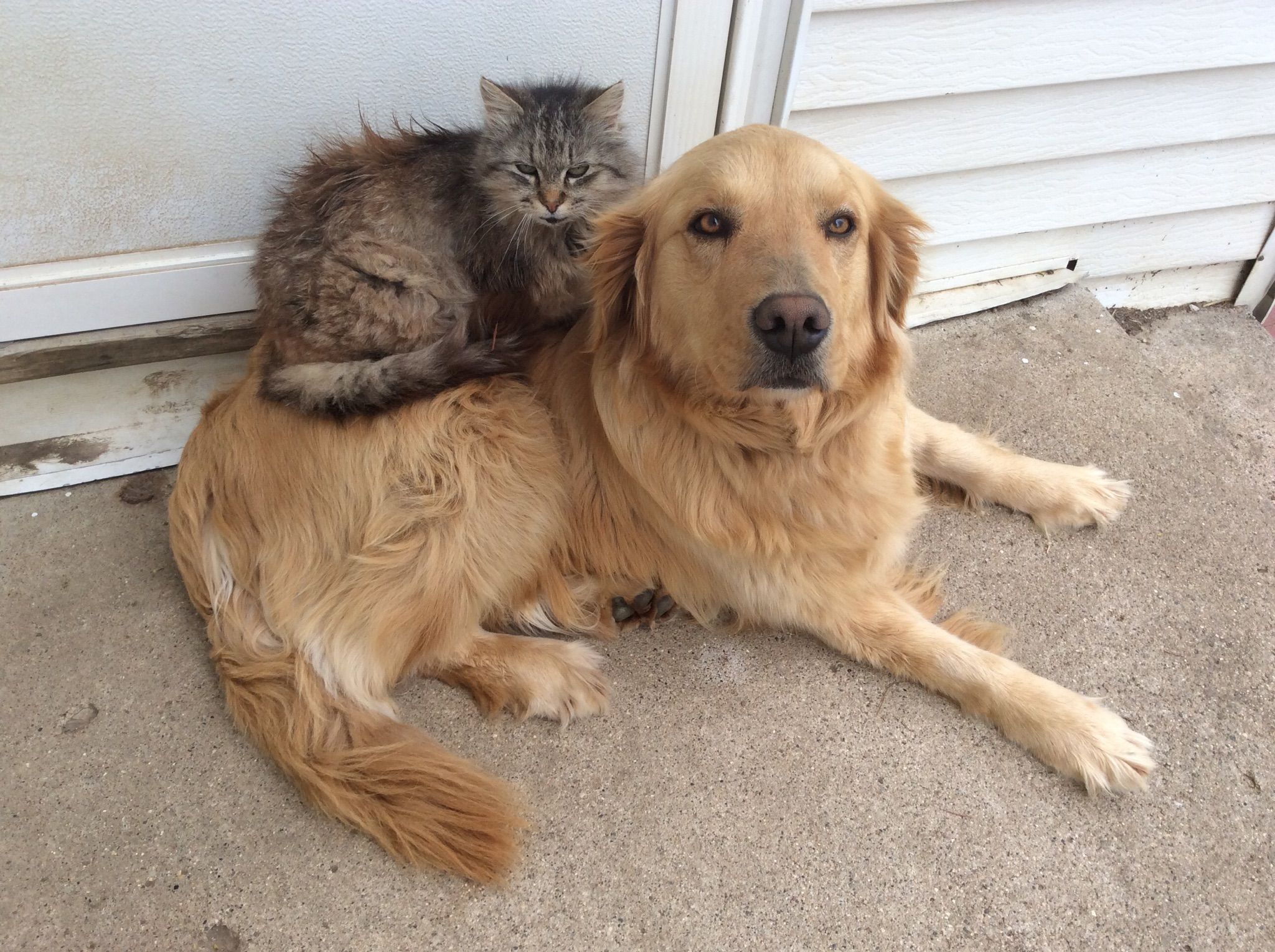 Friendly Farm Kitties and Doggo http://ift.tt/2osKthg