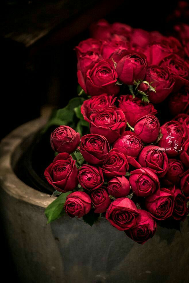Lovely Roses Nature Pinterest Flowers Love Rose And Red Roses