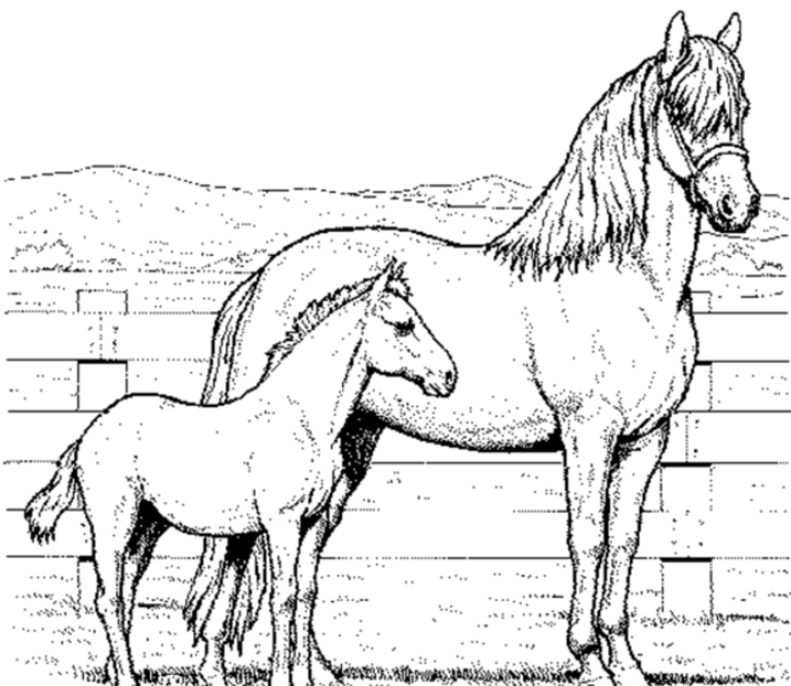 ausmalbilder pferde baby  printable pegasus coloring