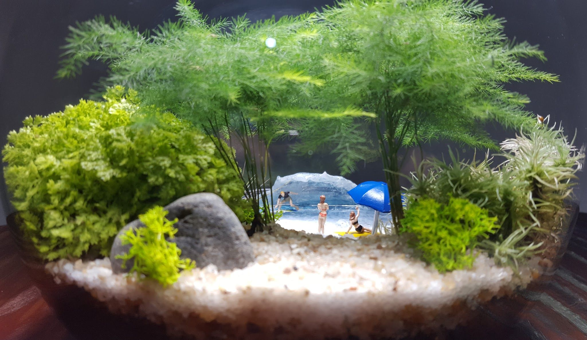 Marimo Stone Moss Miniature Dollhouse Garden Craft Fairy Bonsai Plant Decor+q