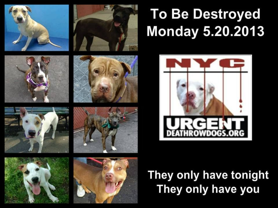 8 dogs are almost out of time. The shelter opens 8am but