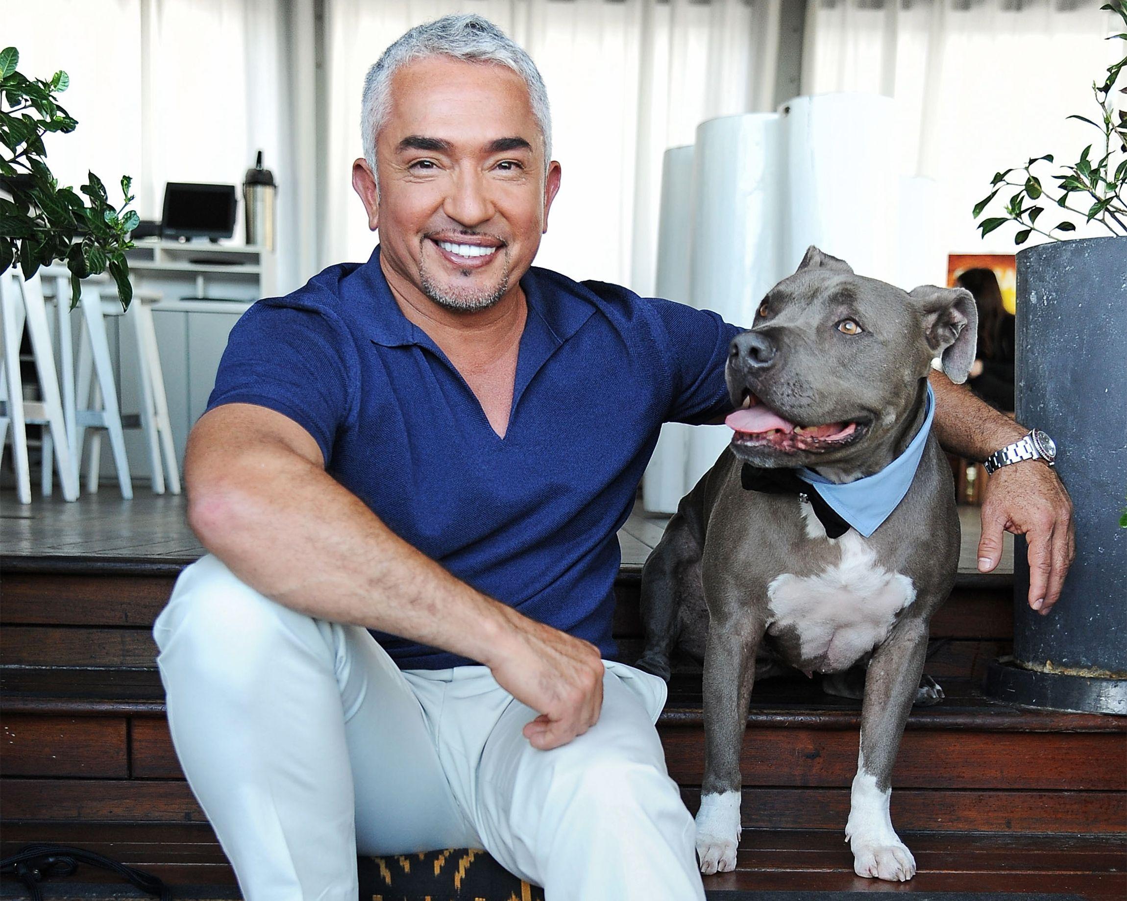 how to teach your dog to heel cesar