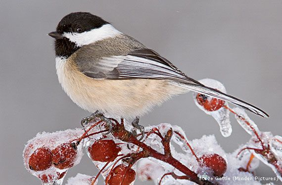 Help Birds Weather Winter - National Wildlife Federation ...