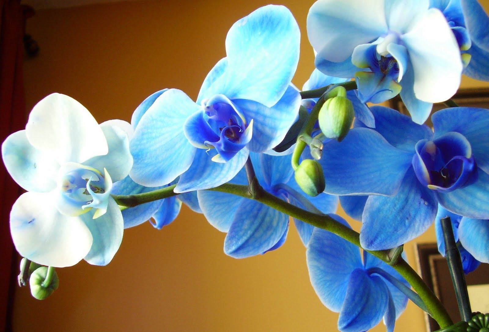 Wonderful Blue Orchid Flower In The Sunlight Beautiful Flowers And Plants Wallpapers Hd Wallpaper Download Fo Blue Orchid Flower Blue Orchids Orchid Flower