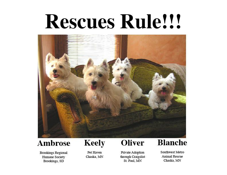 My Westies As Ambassadors For Rescue And Raw Food Diets Westies Raw Food Diet Raw Food Recipes