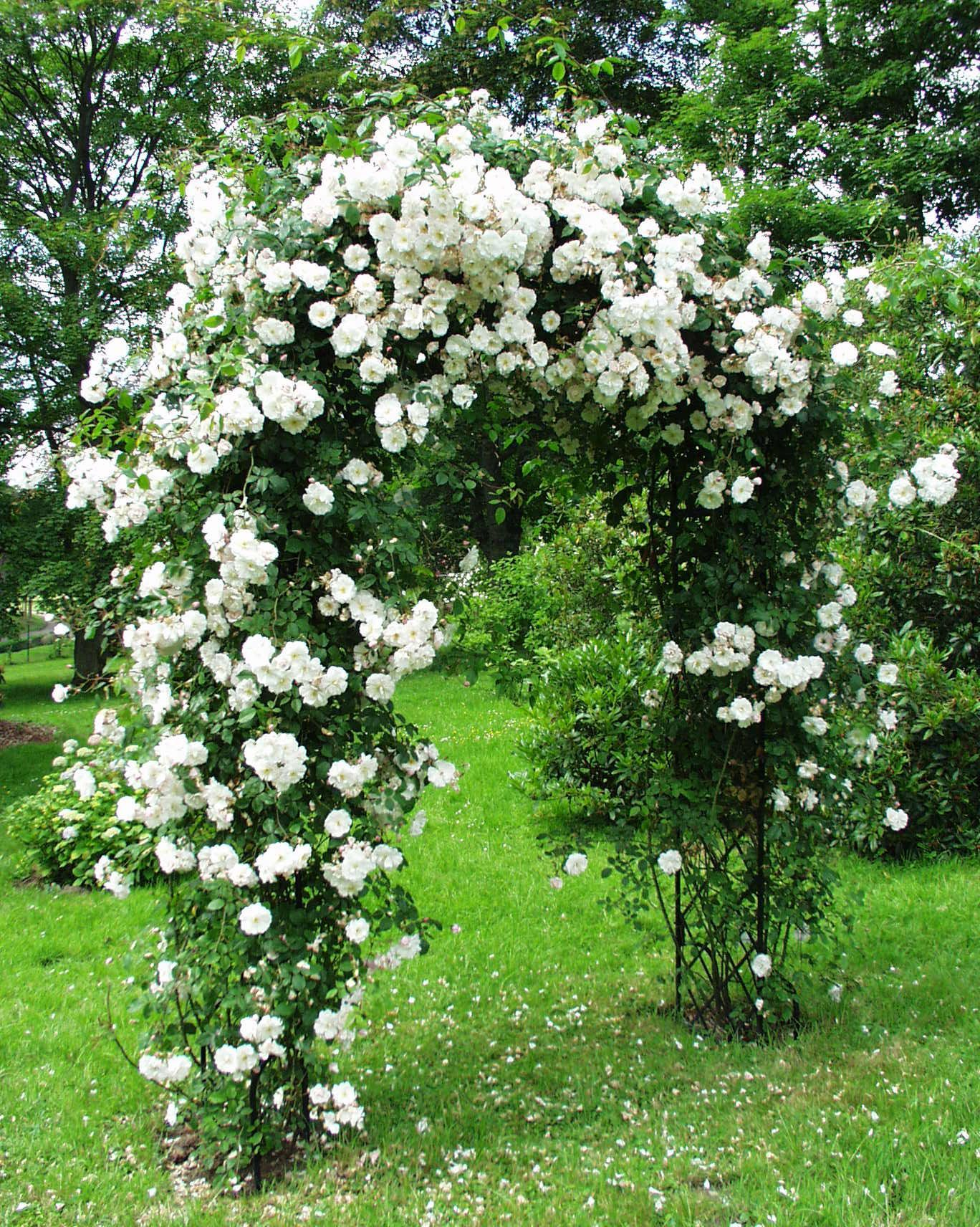 trellis made of branches | ... - Garden-Obelisks, Rose ...