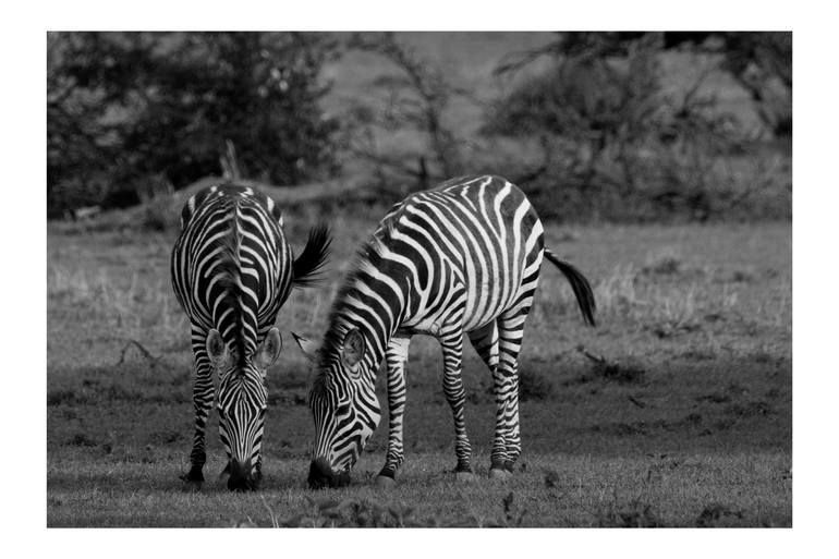 Photo of Original Animal Photography by Jean-pascal Levasseur | Documentary Art on Paper | Together in Kenya – Limited Edition of 10