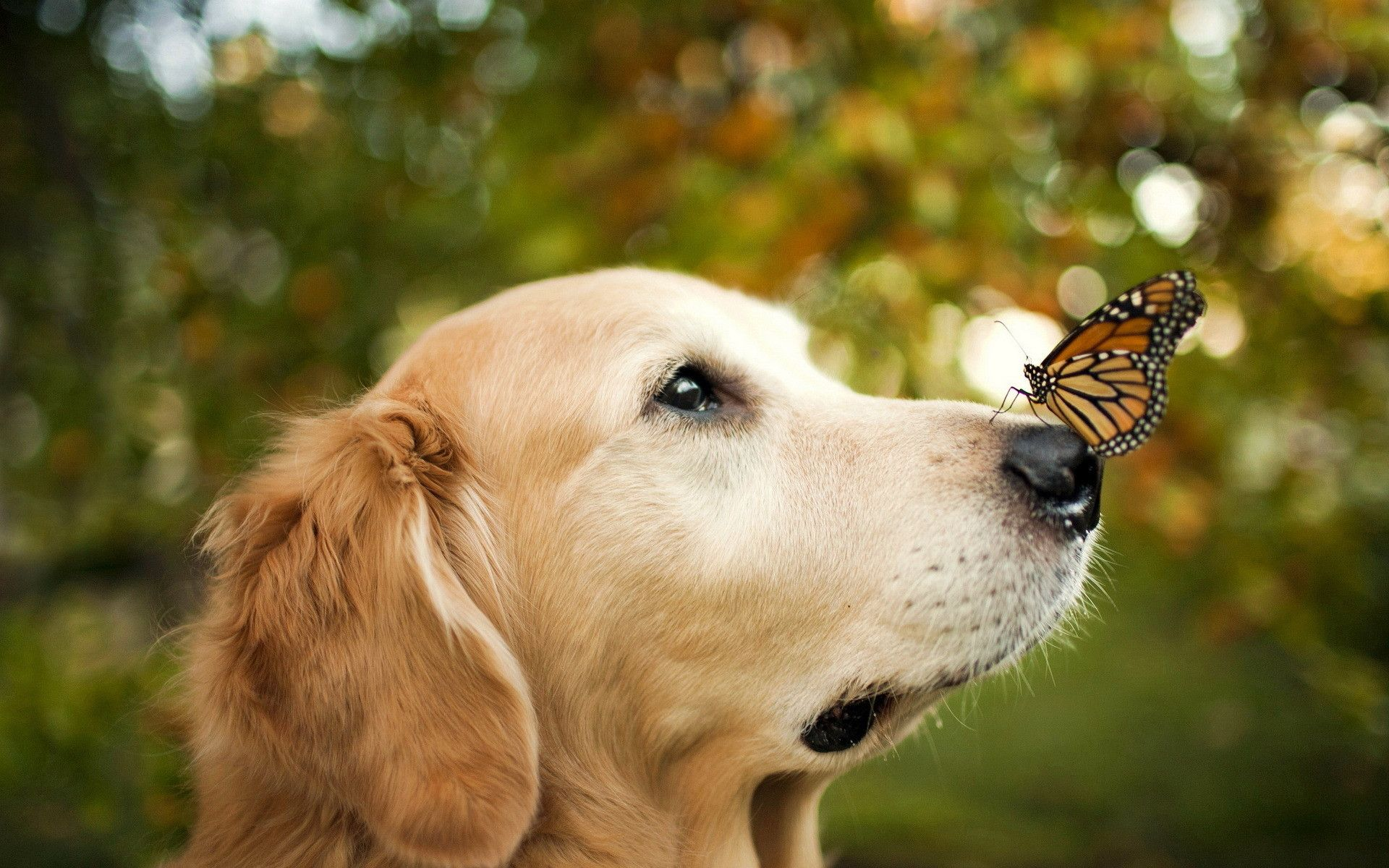 Dog Butterfly Happy Dogs Dog Photos Cute Animals
