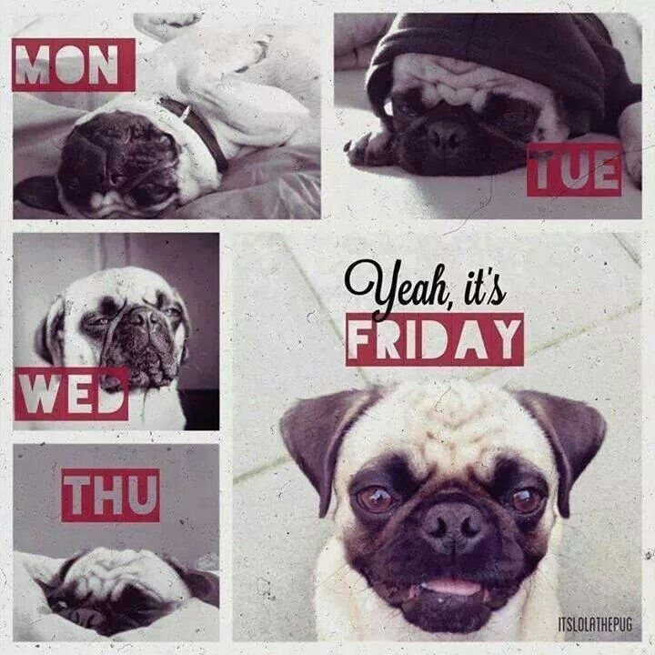 It's been one of those pug weeks..