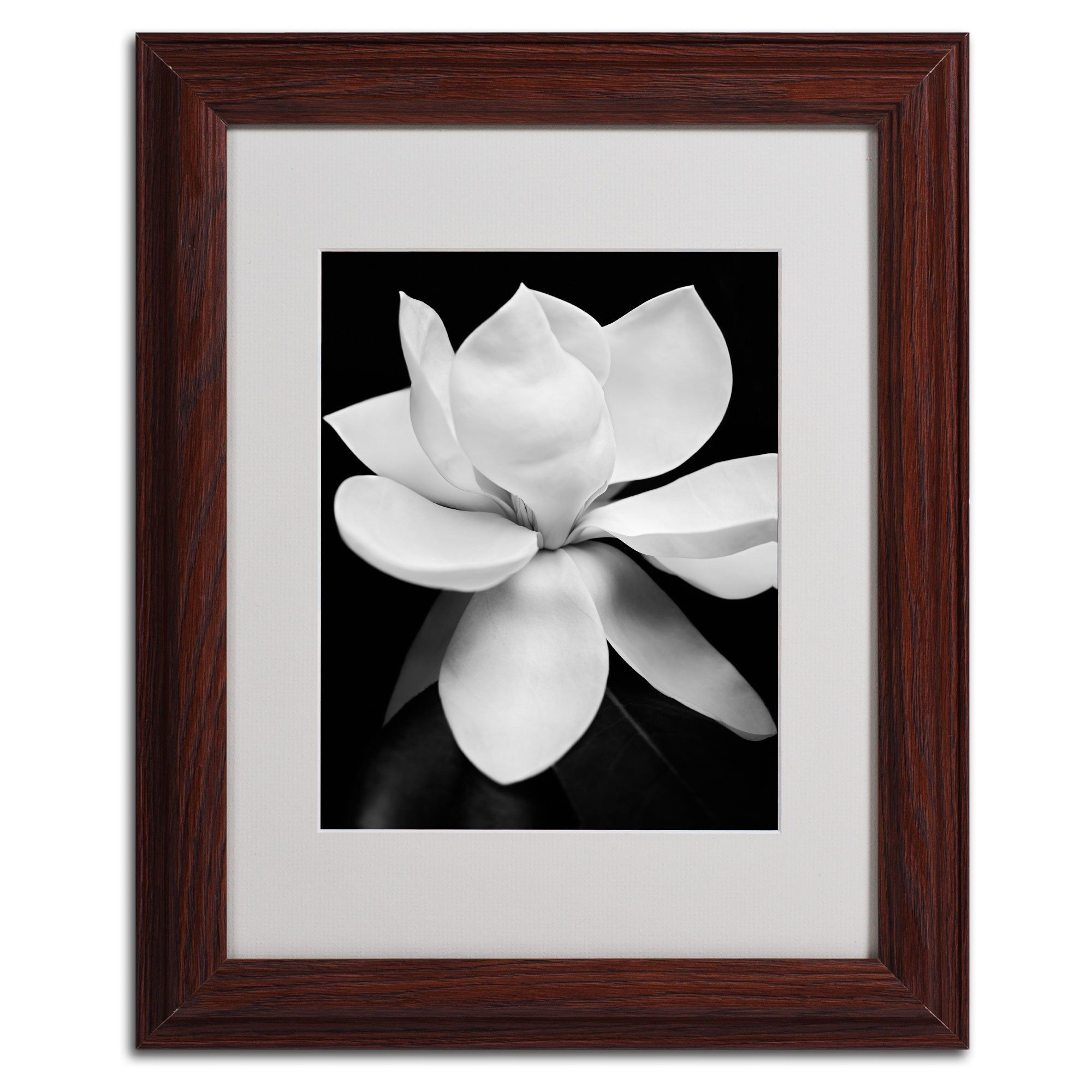 Magnolia by Michael Harrison Matted Framed Photographic Print