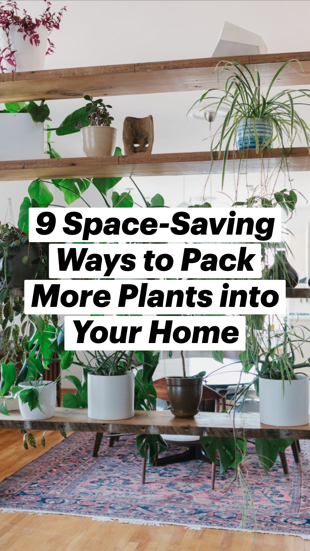 9 Space-Saving Ways to Pack More Plants into Your Home