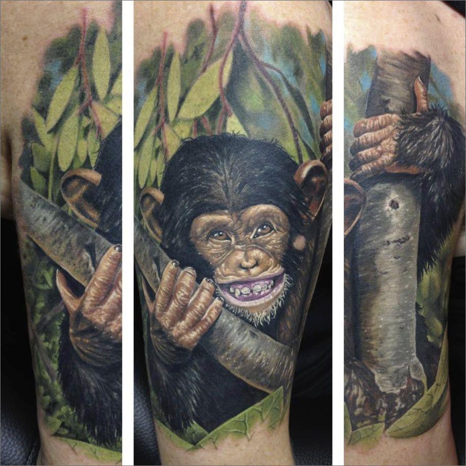 brilliant monkey portraitrandy engelhard who specializes in