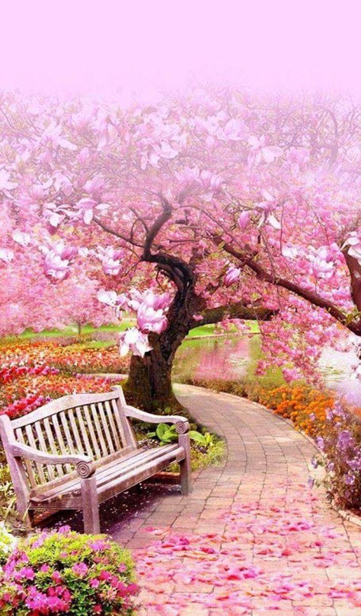 Wallpaper Taman Bunga : wallpaper, taman, bunga, Rekha, Adoráveis, Banquinhos, Taman, Indah,, Lanskap,, Bunga, Sakura