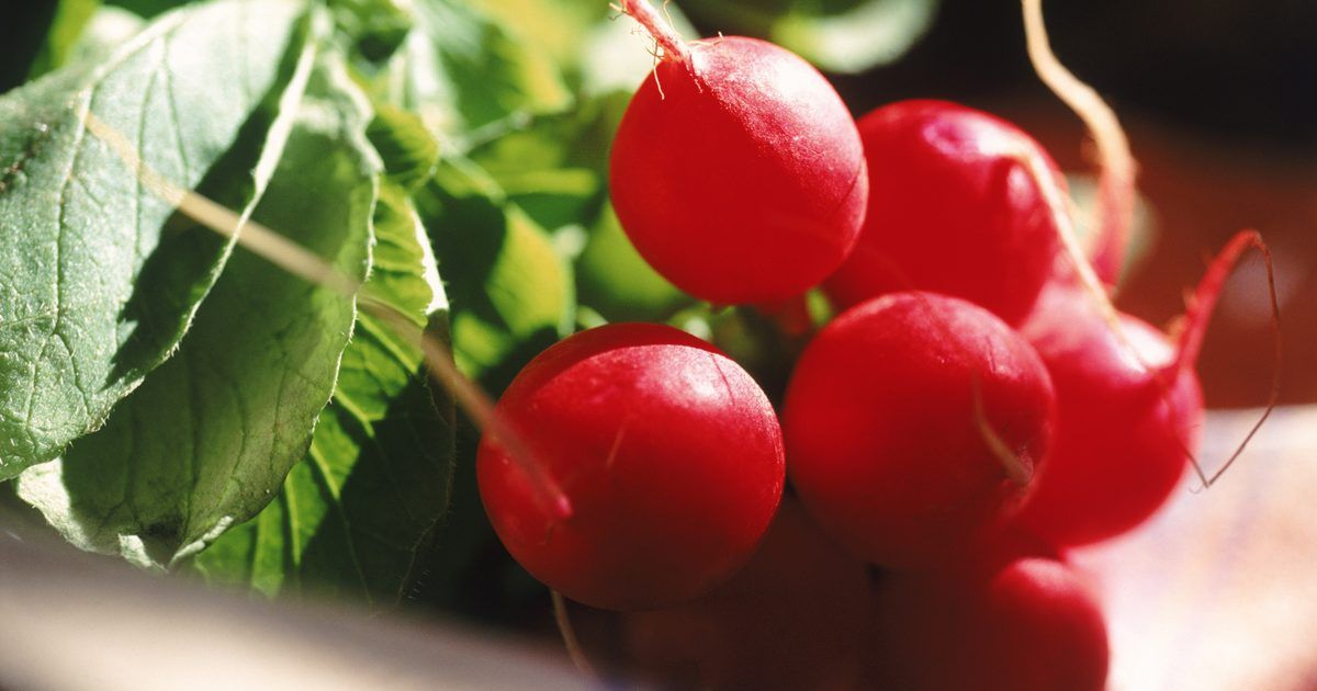 Lista de vegetales q crecen rápido