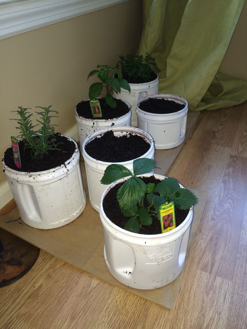 Reuse Folgers Coffee Containers As Planters For Your Mini