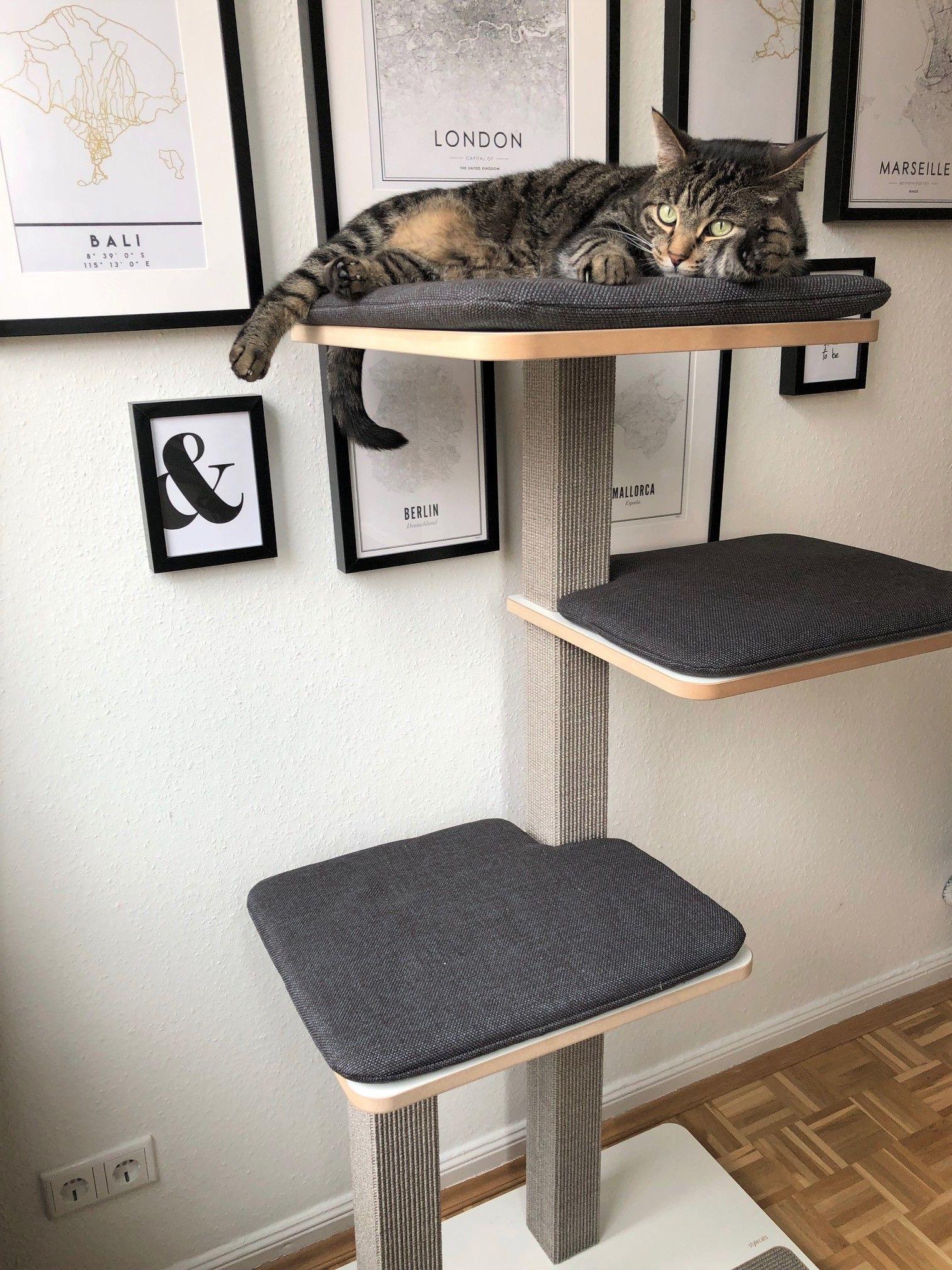 Costruire Lettiera Per Gatti le migliori 654 immagini su gatti nel 2020 | gatti