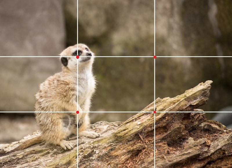 Técnicas fotográficas que deixam as fotos profissionais