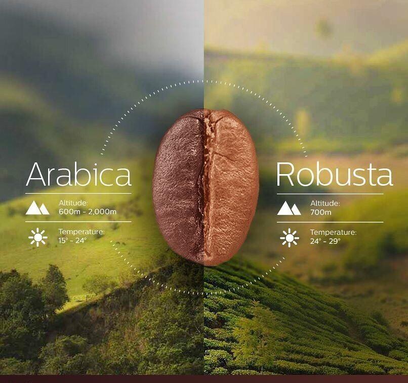 كافيتالي On Instagram تزرع أشجار البن في المناطق الاستوائية فهي تنمو علي إرتفاع يتراوح بين 600 و 7200 قدم فو Coffee Beans Coffee Cafe Fair Trade Coffee Beans