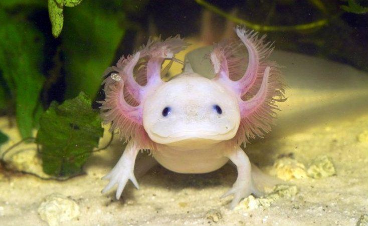 20 espèces animales étranges qui risquent de bientôt disparaître ...