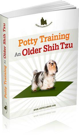 The Shih Tzu Potty Training Master Class Brady Zoey Dog