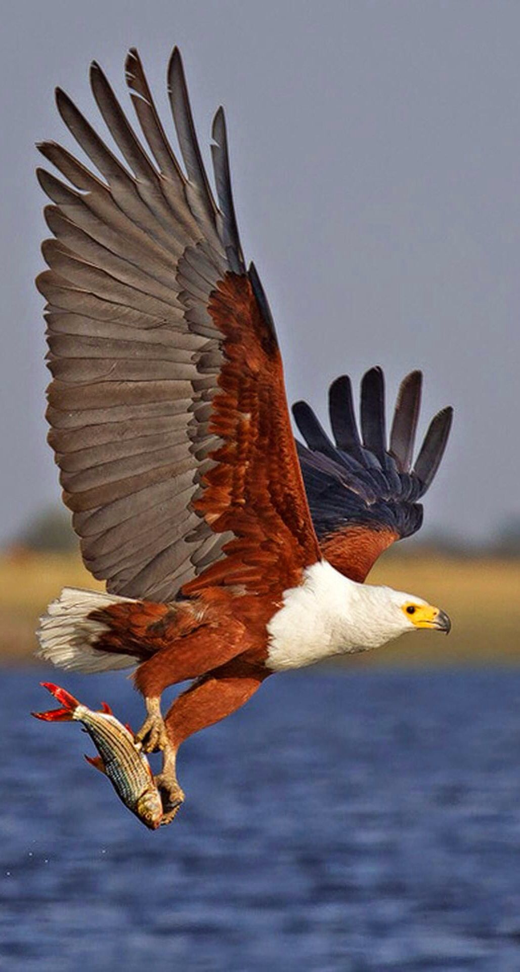 11 Types of Eagles in The World With Awesome Pictures