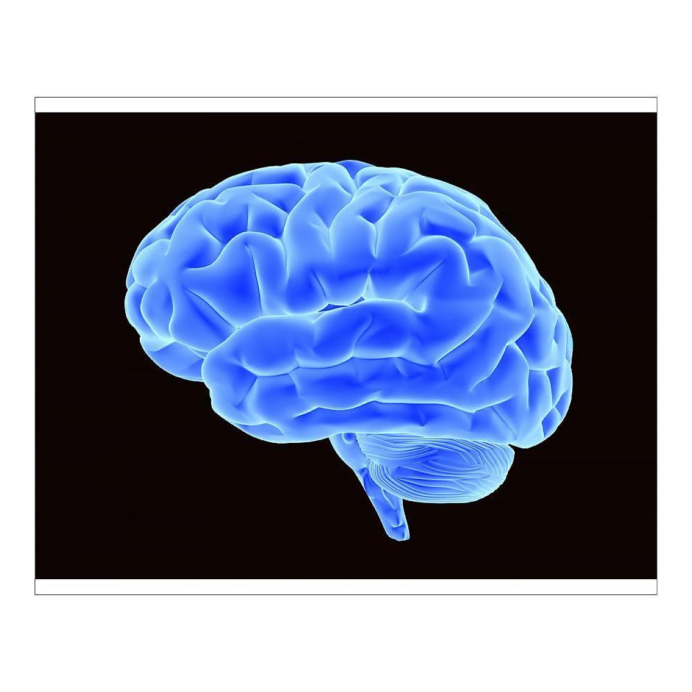 15+ 10 inch Photo. Bright blue brain, 3D illustration