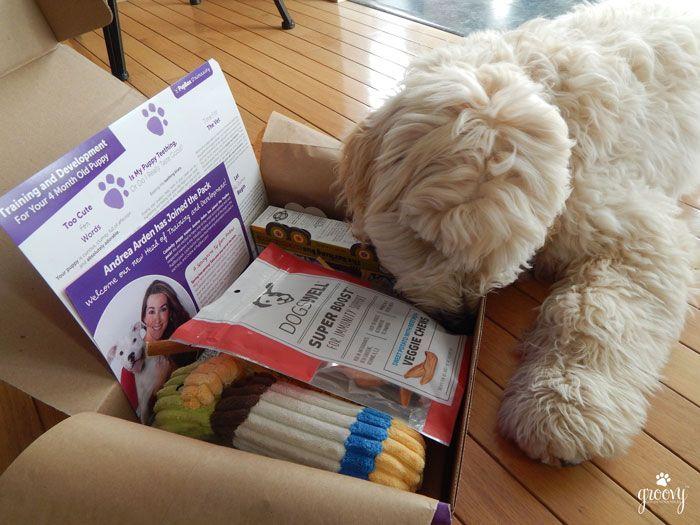 Pupbox for puppies
