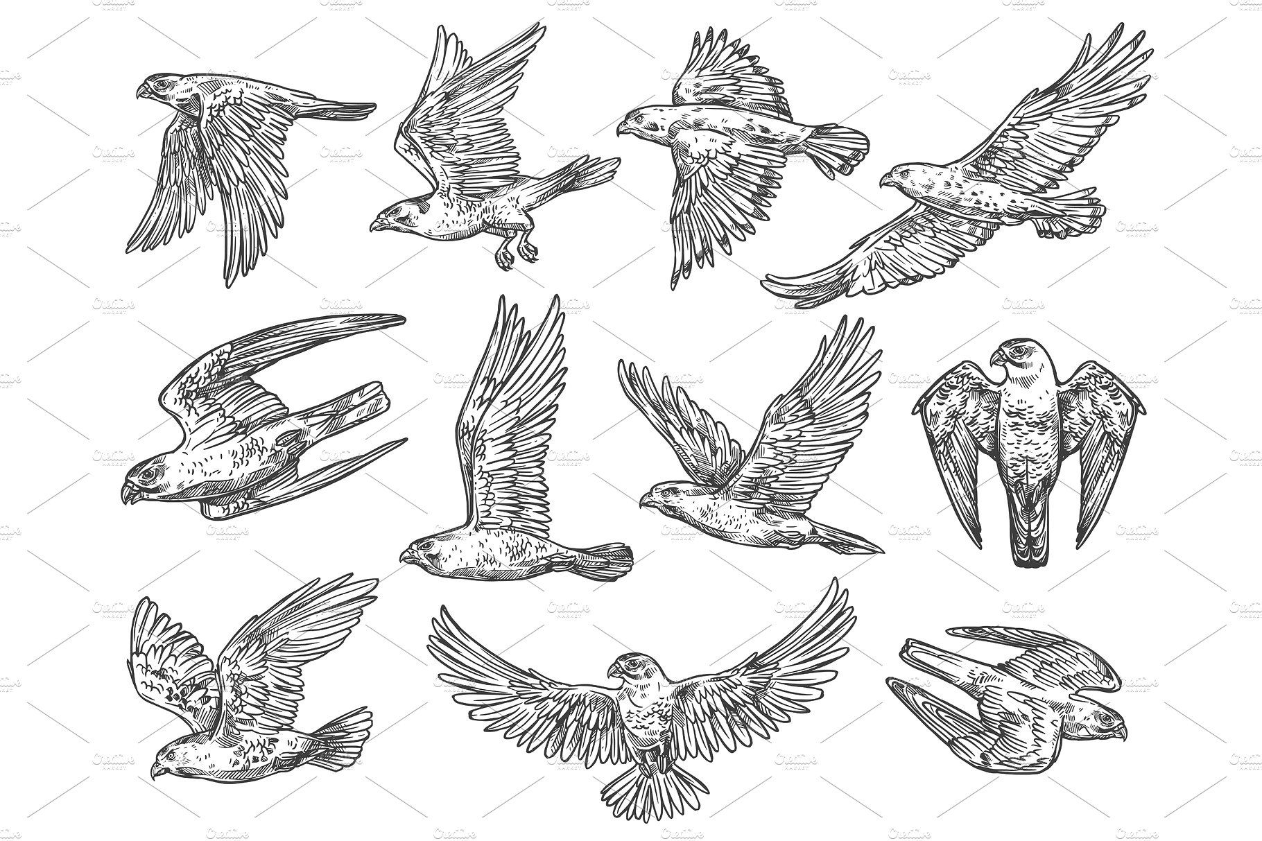 Sketches Of Eagle Falcon And Hawk Eagle Sketch Bird Of Prey Tattoo Falcon Drawing