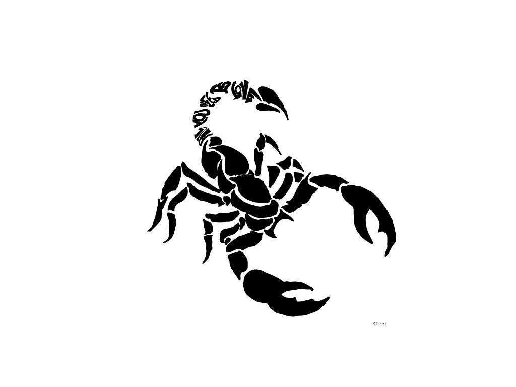 Images About Scorpion Tattoo Design On Pinterest - Contour of scorpion tattoo wallpaper