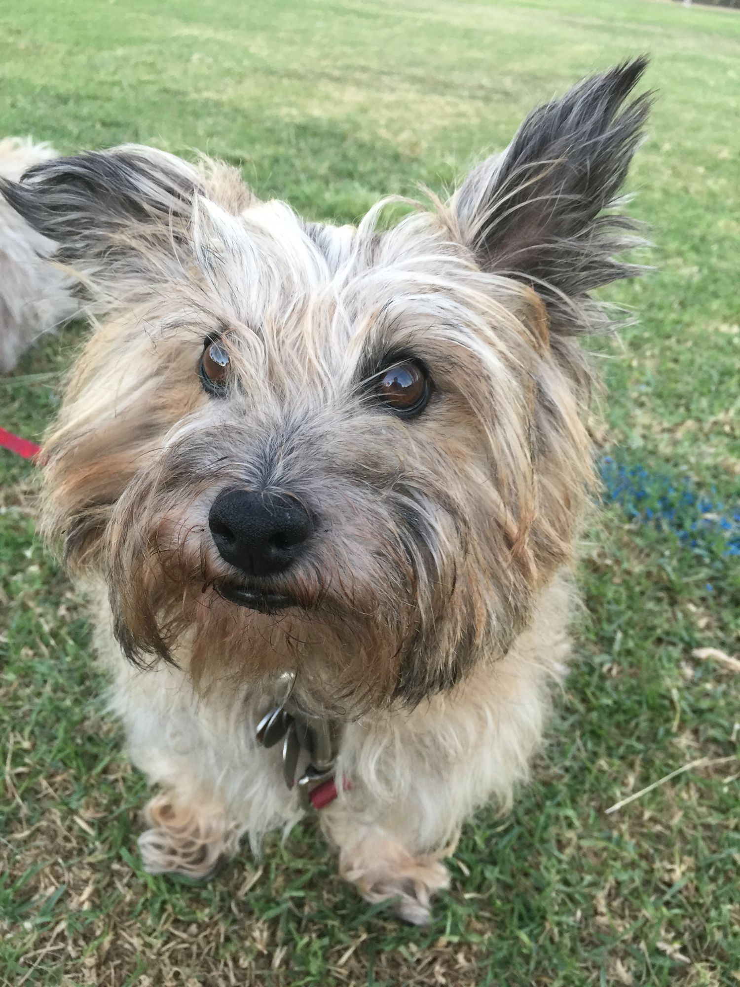 """zee zee says """"i need a haircut"""" 