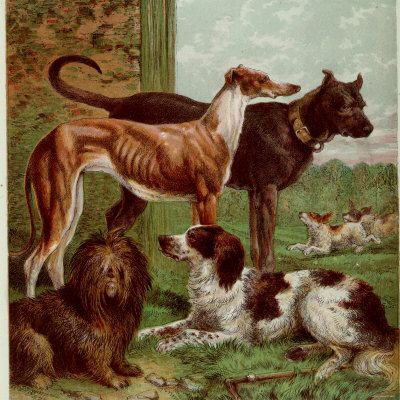 Illustration by Kronheim of Various Dogs from Aunt Louisas Birthday Gift