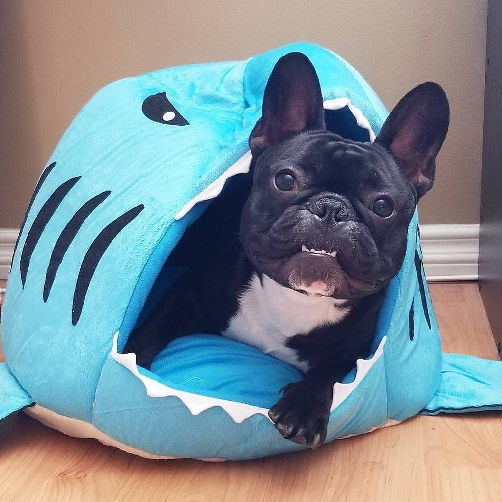 Hey Black Friday Get This Shark Bed From Just 20 With This 40