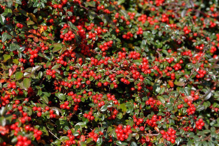 Grabpflanzen: Beispiele für pflegeleichte Pflanzen #pflegeleichtepflanzen