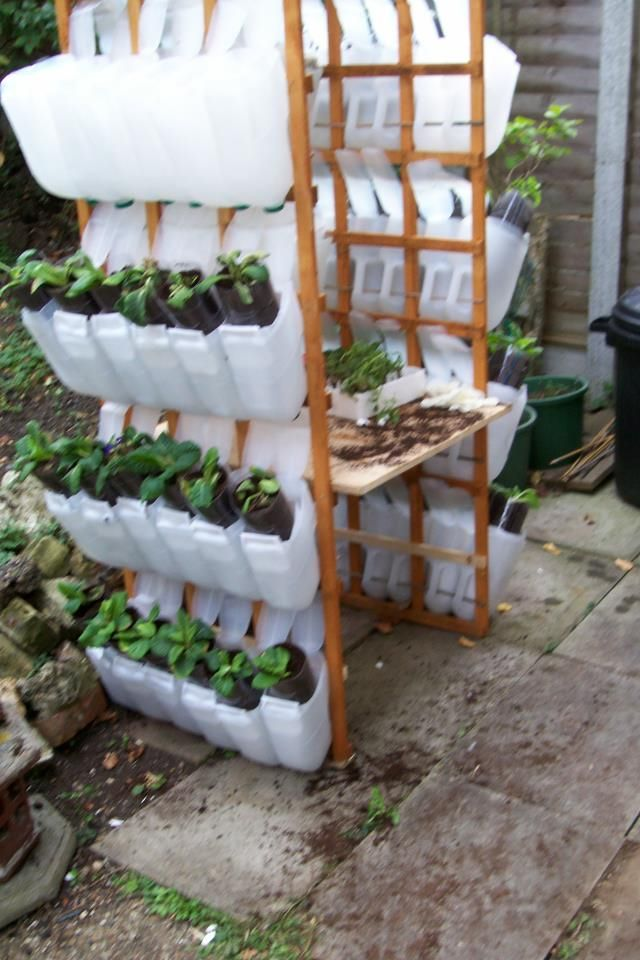 Plastic Milk Jug Greenhouse