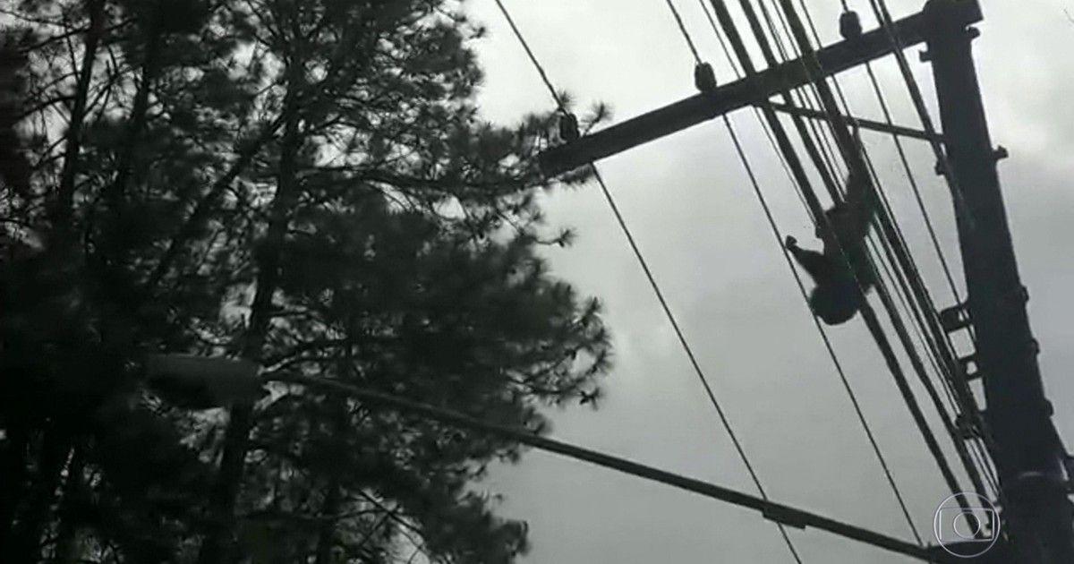 g1: Macaco toma choque em fios elétricos na Grande SP; veja vídeo https://t.co/UmgJ0IaIzt #G1 https://t.co/RuqCondy8n