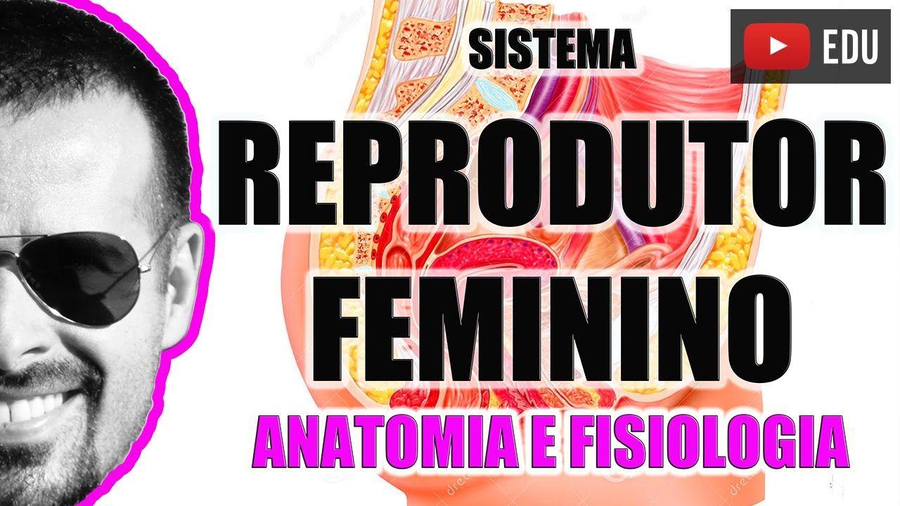 Sistema Reprodutor Feminino Orgaos Genitais Femininos Anatomia
