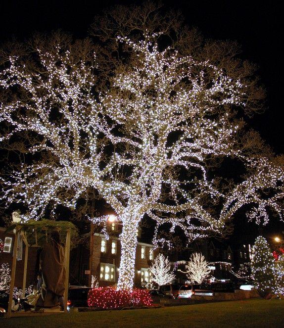 christmas lights on trees - Google Search - Christmas Lights On Trees - Google Search FELIZ NAVIDAD