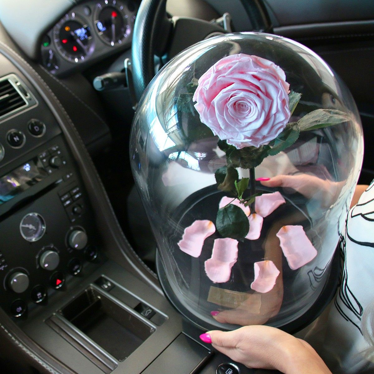 The Original Enchanted Rose That Lasts A Year In Gl Dome Roses Last 1