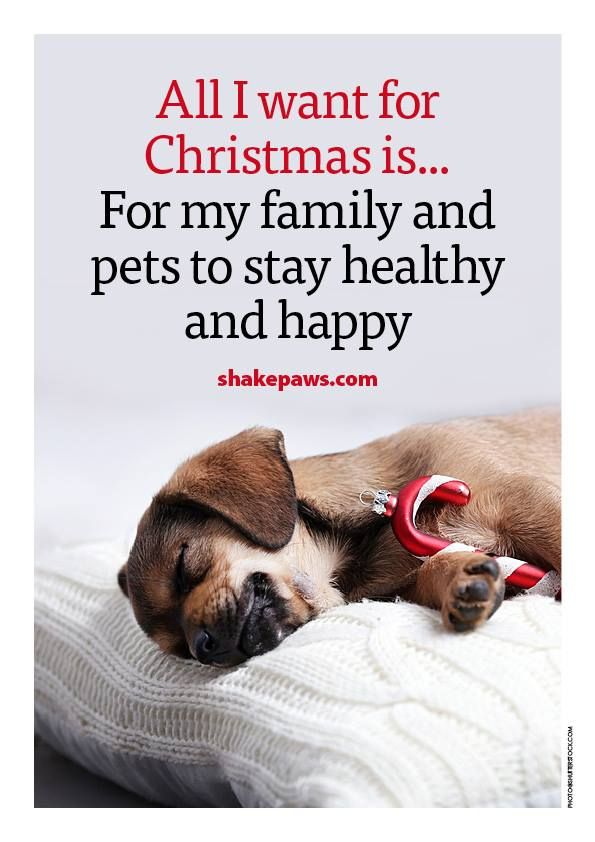 All I Want For Christmas Is For My Family And Pets To Stay