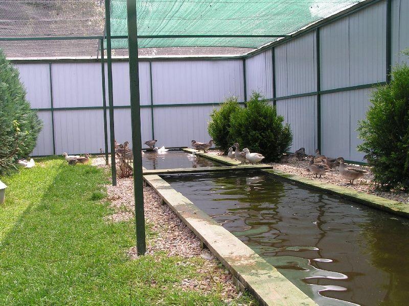 Waterfowl aviary aviary ideas dreams pinterest for Garten pool coop