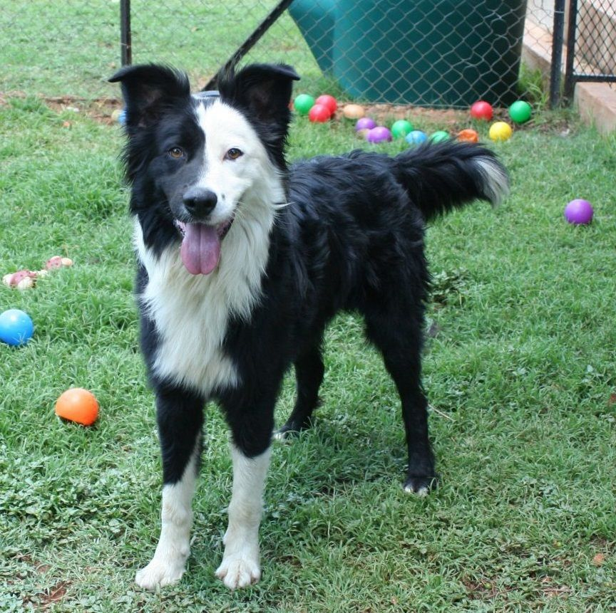 Adorable Neo Is Up For Adoption In Sunny South Africa Adopt A
