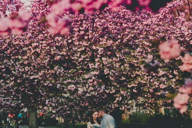 beautiful use of cherry trees in foreground to lead eye to the couple {aga images}