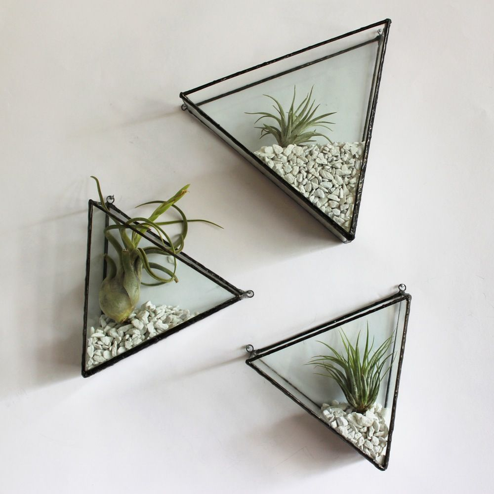Image result for wall mounted terrariums