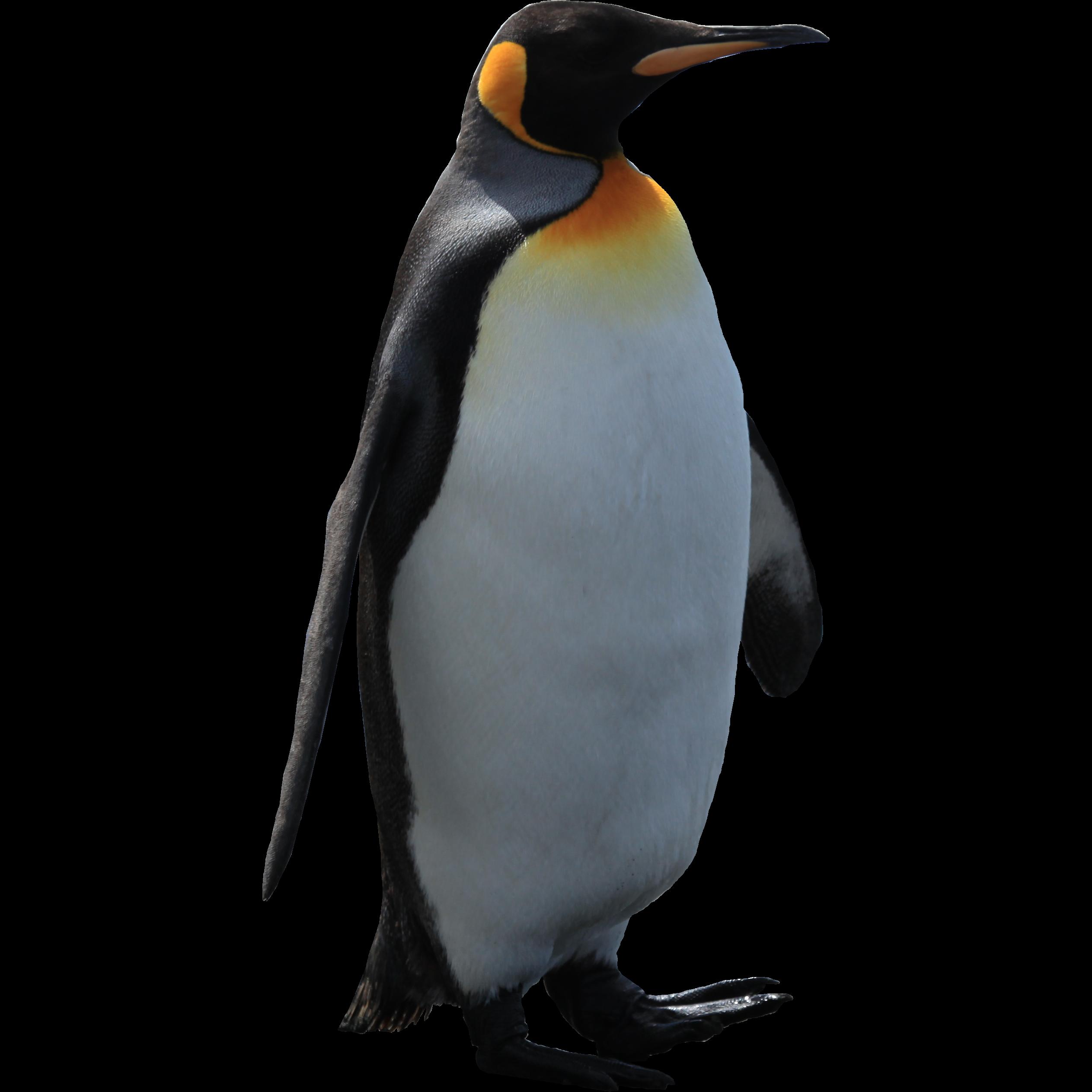 Penguins Penguin Images Animals Images