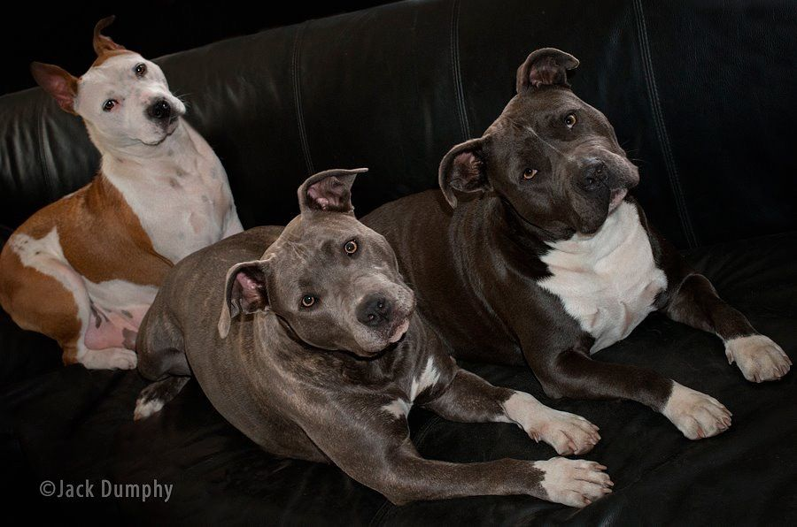 Pin Von Jutta Albrink Auf Noch Mehr Hunde Hunde