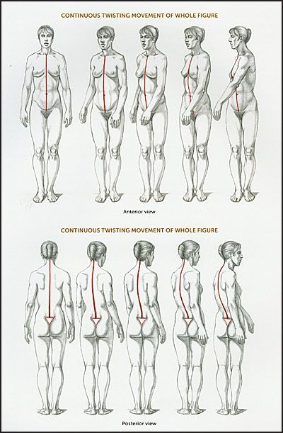 Valerie L Winslow Classic Human Anatomy Google Search Anatomy In